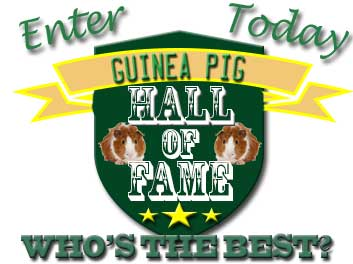 Cute Guinea Pigs Hall of Fame