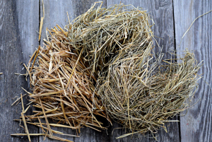 straw vs hay for guinea pig bedding