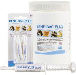 Best Guinea Pig Probiotics