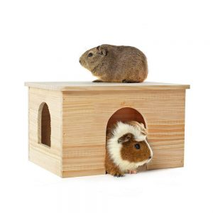 Abyssinian Guinea Pig Hidey House